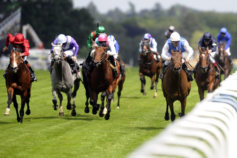 queen anne stakes betting trends public