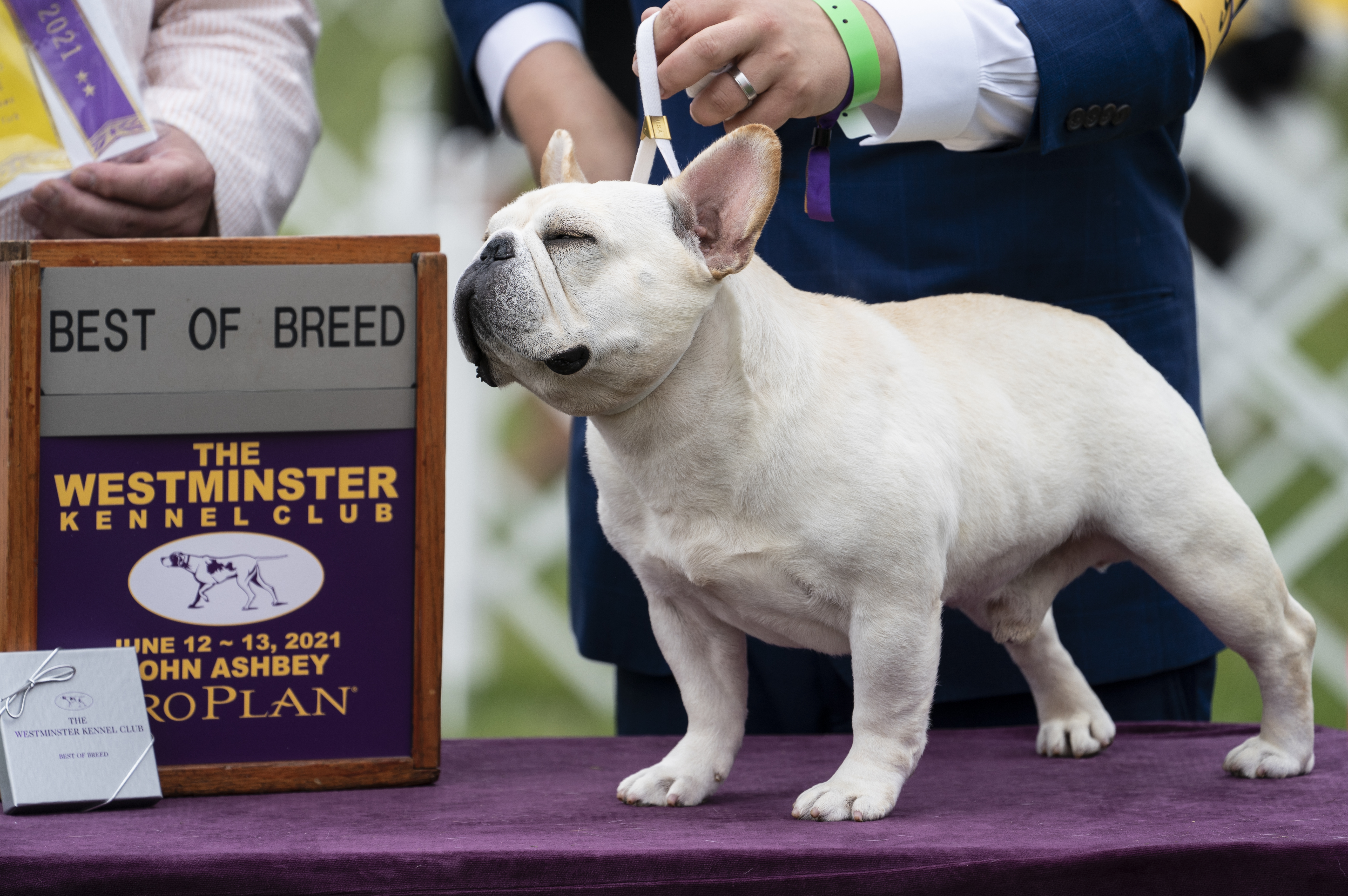 <p>Westminster Dog Show 2021 Results: Best of Breed Winners and Saturday Recap thumbnail